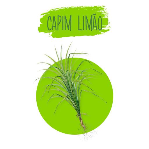 cymbopogon-citratus