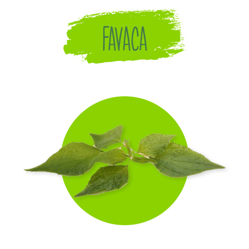 favaca